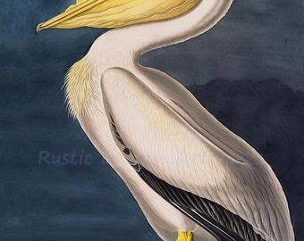 "John Audubon ""White Pelican"" 1861 Reproduction Digital Print Bird Wildlife Nature Wall Hanging"