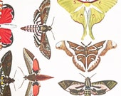 Colorful Moths nr. 2 - Glass Fusing Decal, Ceramic Decal, Enamel Decal