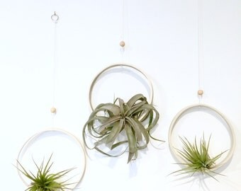 Airplant Ring Cradle Sling Hanging Planter Display for Air Plant MADE TO ORDER