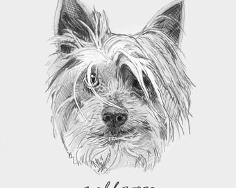 custom pet portrait sketch // digital file