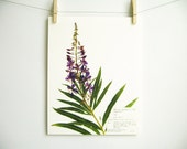 Fireweed Print; purple wildflower print pressed plant art purple flower print of original botanical print pressed flower art oregon art 134