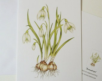 Snowdrops Spring Bulb Greeting Card