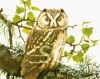 1961 Tengmalm's Owl Boreal bird prints Vintage illustration Ornithology Nature Wall art Home Decor