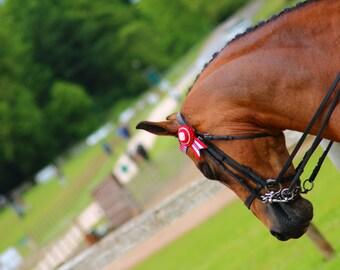 Horse Fine Art Photography Digital Download