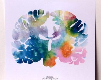 "Human Brain - Neurology Art - Animal Brain Biology - 8.5"" x 8.5"" Watercolor Brains for Artists, Neurologists, and Feminists"