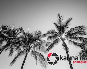Black and White Beach Print, Palm Trees Photograph, Airlie Beach, Whitsundays, Wall Art, Home Decor, Travel, Landscape