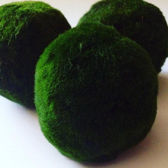 Marimo moss ball aquarium plant from northwestkombucha on for Marimo moss ball