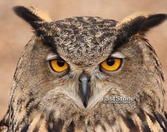 Owl, Eurasian Eagle Owl, Bird of Prey, bird Photography, photo, print, home decor, wall art, nature photography, owl photos, best seller