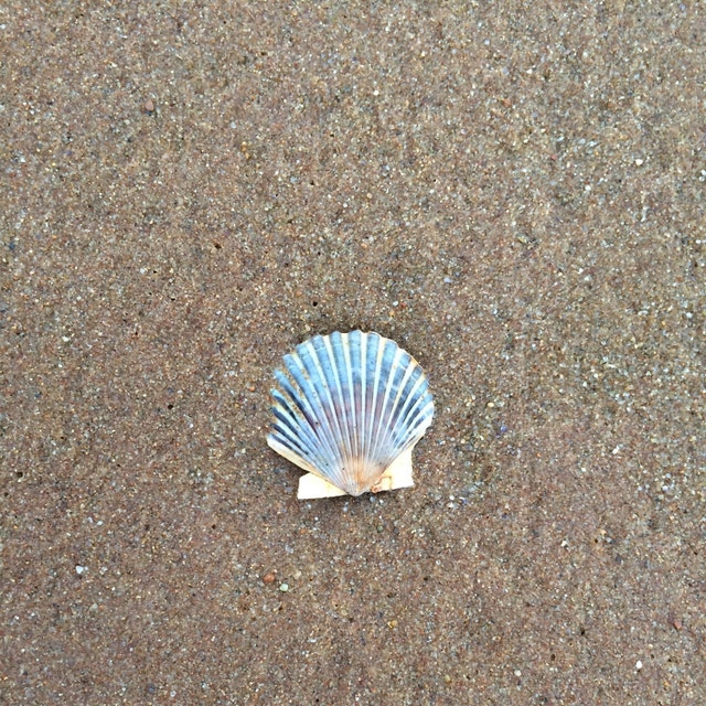 Shellfishing Cape Cod: Sea Trash Treasures From The Coast Of Cape By