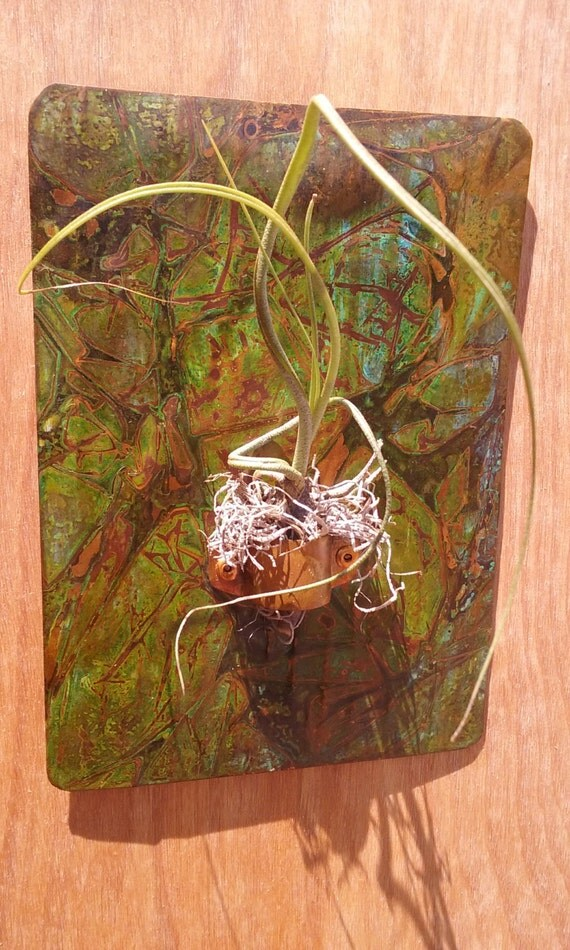 Metal Wall Recycled Copper Air Plant Holder 7 X 5 inch Green