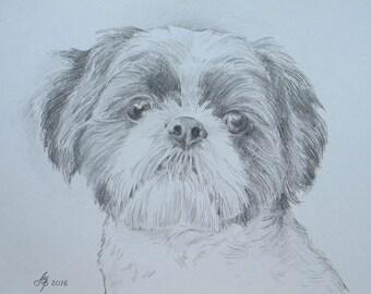 Portrait of your pet pencil to order through your photos, original, hand-made