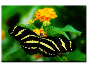 Resting Wings - Butterfly Photography Print