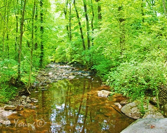 Lazy Summer Creek, Lush Green Woods, Rocky Creek, Flowing Water, Water Reflections, Green and Brown, Nature Art Print, Fine Art Photography