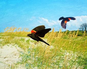 Bird Art Print, Red Winged Blackbirds Flying, Summer Beach Dunes, St Simons Island, Nature Art Print, Bird Wall Decor, Fine Art Photography