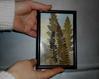 Pressed flowers collage, pressed leaves art, natural art, botanical art