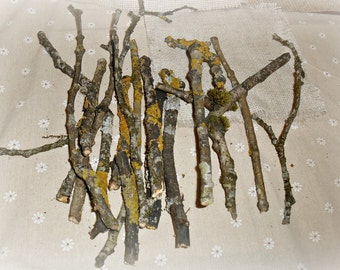 Mossy branches, twigs with moss, cut branches, set of 15, natural supplies