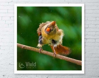 Bird photography, framed cardinal print, square framed print, canvas art, female cardinal, bird wall art, matted print, 12x12 frame, 16x16