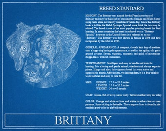 Brittany Portrait / Brittany Art / Brittany Wall Art / Brittany Print / Brittany Gift / Brittany Dog Gift