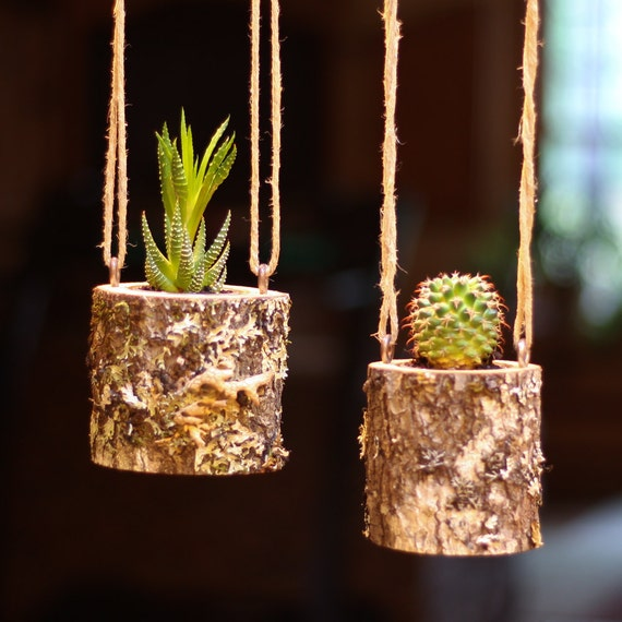 Hanging planter indoors rustic hanging succulent planter log for Wooden cactus planter