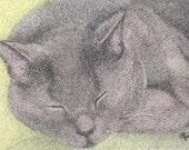 ACEO Sleeping Gray Cat ATC