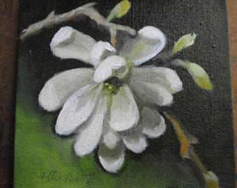 STAR MAGNOLIA  6X6 oil painting