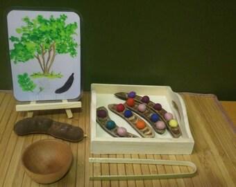 Texas Ebony Seed Pod Fine Motor Activity and Accompanying Watercolor