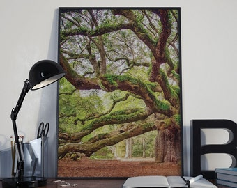 Angel Oak Tree, Angel Oak Photography, Charleston Photography,  Charleston Art, South Carolina Photography, SC Landscape, Forest FIne Art