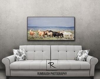 Wild Horse Art- 'Centauro's Band'-  Wild horse print