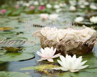 Digital Newborn Photography Prop Backdrop - Sea Roses -2 JPGs