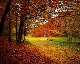 Autumn Trees Fall Leaves Nature Digital Backdrop Background
