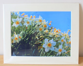 Spring Daffodil Wild Flowers Mounted Fine Art Photography Print 10x8 Wildlife Nature Landscape Home Decoration Wall Art Gift for Her