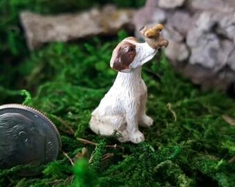 Miniature Teeny Puppy Beau