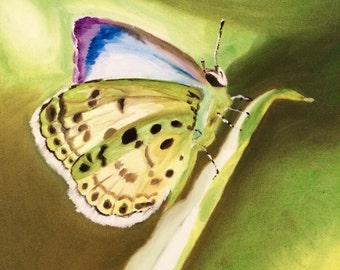 Butterfly oil Painting on Canvas- Pale Grass Blue