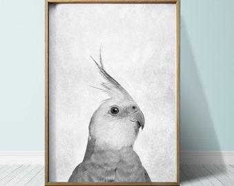 Parrot Print Parrot Poster Wall Art Print Animal Print Parrot Art