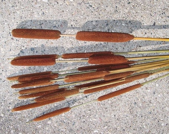Double Cattails.  Harder to find.  Floral arrangements, bouquets, centerpiece, craft projects, craft supplies.