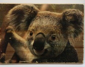 Pic2grain A5 size - Koala