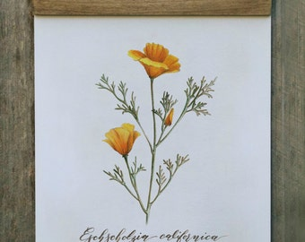 Wall Hanging, Wall Art, Art Print, Home Decor, California Wildflower, Botanical Illustration, California Poppy, Wood Trimmed