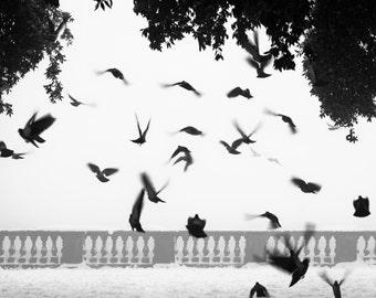 Black and white birds hurban stunning printable photo 20 x 20 cm