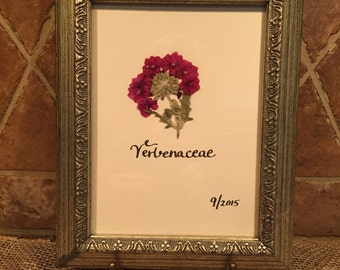 Framed botanical - burgundy verbena