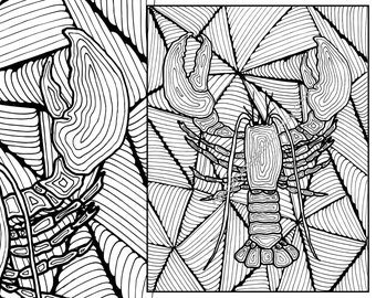 lobster adult coloring page adult coloring sheet colouring sheet pdf adult colouring