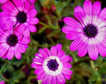 Purple Flowers Digital Download
