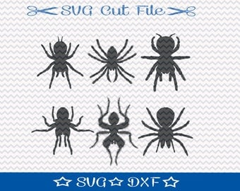 Spider SVG File / SVG Cut File for Silhouette / Animal SVG / Insect svg  / Tarantula svg