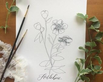 """Floral Inked Print - 8.5x11 - """"Hellebore"""""""