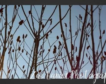 Spring Tree Bud Photo, Tree Bud Photo, Nature Photo, Tree Photo, Woods Photo, Tree Photo, Tree Branches Photo, Branches Photo, Nature