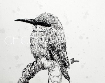 Pen & Ink Sketch Bird Bee-Eater