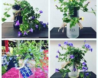 Wine bottle self-watering planter