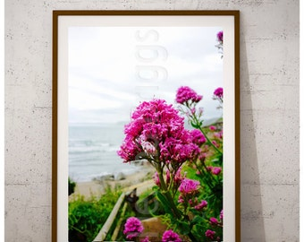 Red Valerian, Bigbury, Bigbury Beach, Bigbury Home Decor, Bigbury Photo, Bigbury Picture, Bigbury Print, Bigbury Artwork, Bigbury Gifts
