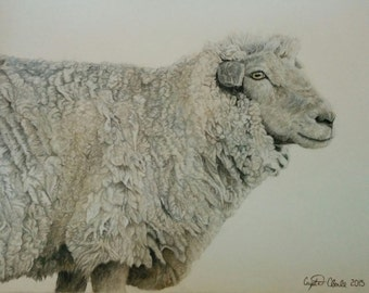 "Sheep - Original Piece of Art 16"" x 20"""