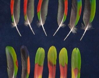 12 pcs miscellaneous amazon parrot feathers