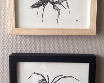 Lot 2 frames critters! * 2 frames Spider /Praying Mantis * Hipster